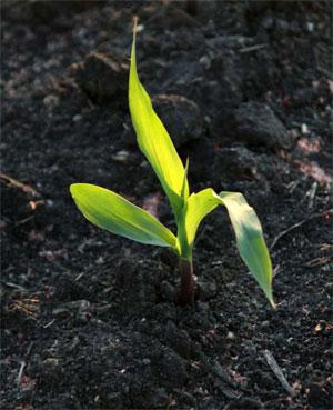 Gro Quality Fertilizer