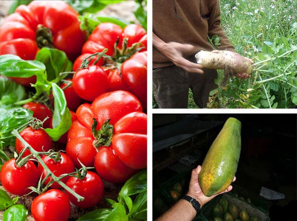 C4 High Quality Food Grade Foliar Fertilizer